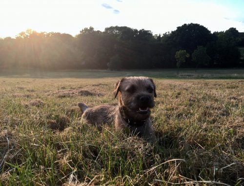 Dog on Streatham Common Park