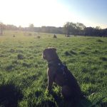 Dogs in Streatham Common
